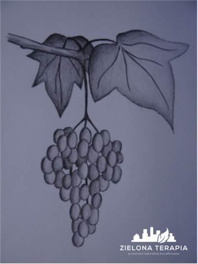 grono winogron - Cięcie winorośli – podstawowe zasady, bez zawiłych szczegółów