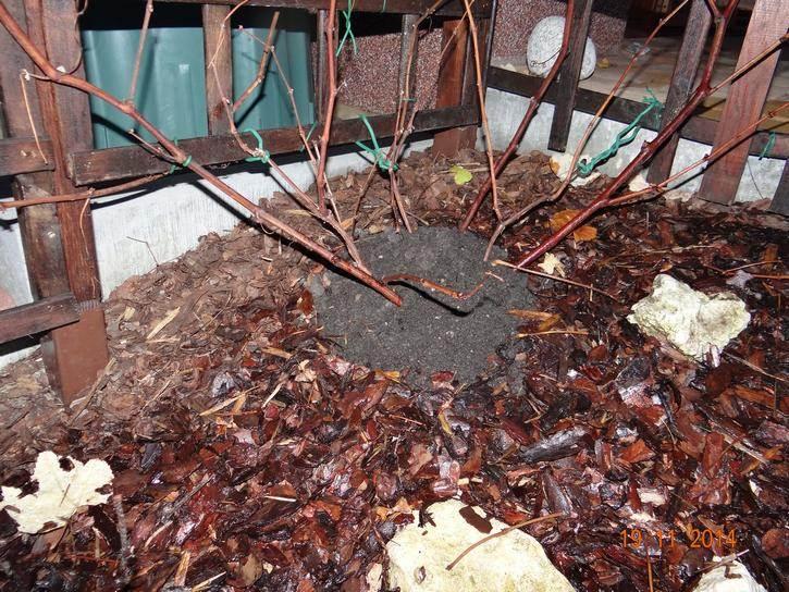"""dsc05201 - """"Ciepłe nóżki"""" - pierwszy etap zabezpieczania roślin przed zimą"""
