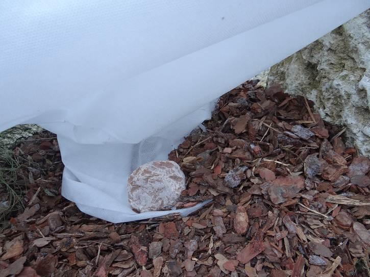 """kolnierzprzysypany - """"Ubranka"""" - drugi etap zabezpieczania roślin przed zimą"""
