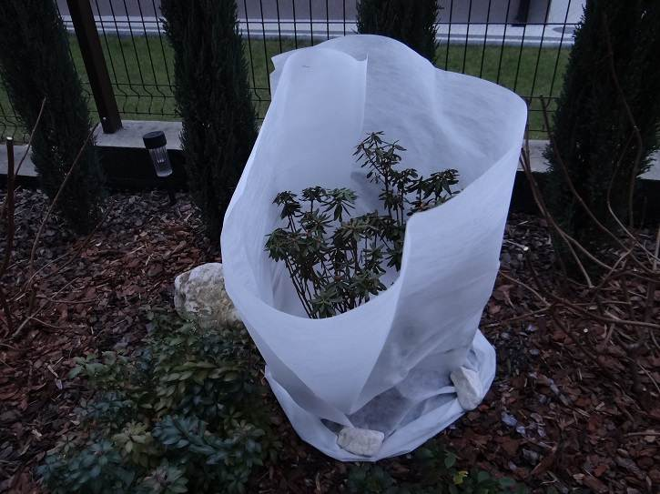 """ubranie2 - """"Ubranka"""" - drugi etap zabezpieczania roślin przed zimą"""