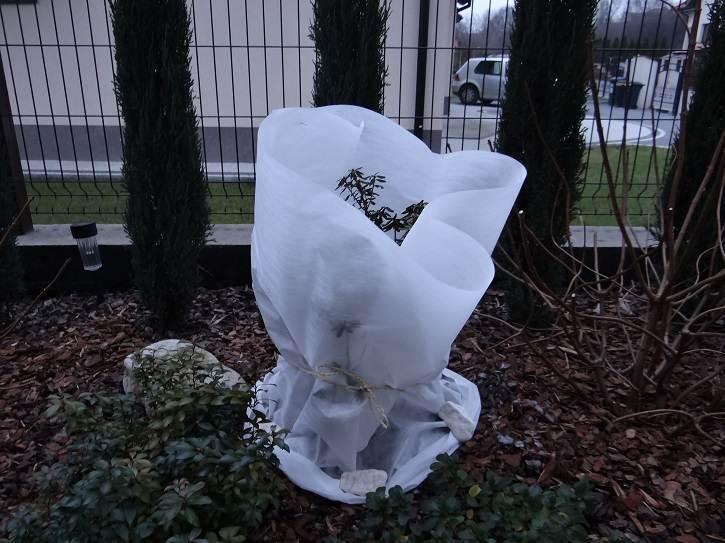 okrywanie roślin na zimę