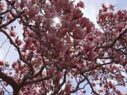 zdjęcie-kalendarz ogrodnika-kwiecień