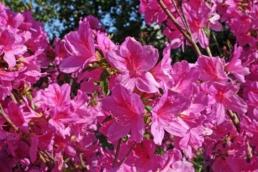 zdjęcie-kalendarz ogrodnika-maj