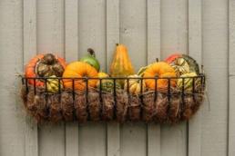kalendarz ogrodnika wrzesień