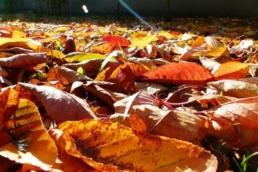 kalendarz ogrodnika październik
