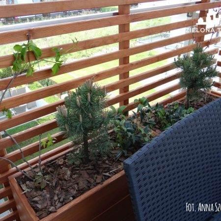 balkon2016_Zielona Terapia