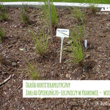 ogród ZOL byliny 2016 4 450x450 - Nadzór nad realizacją ogrodu hortiterapeutycznego