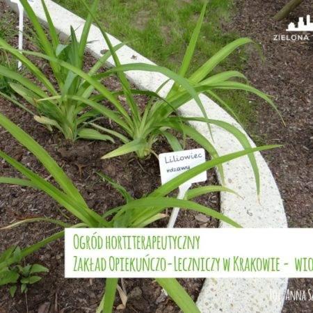 ogród ZOL byliny 2016 5 450x450 - Nadzór nad realizacją ogrodu hortiterapeutycznego