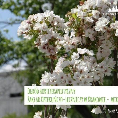 wiosna2016 ogrod ZOL 10 450x450 - Nadzór nad realizacją ogrodu hortiterapeutycznego