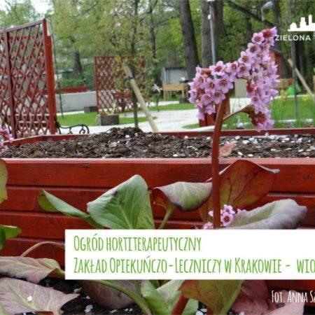 wiosna2016 ogrod ZOL 8 450x450 - Nadzór nad realizacją ogrodu hortiterapeutycznego
