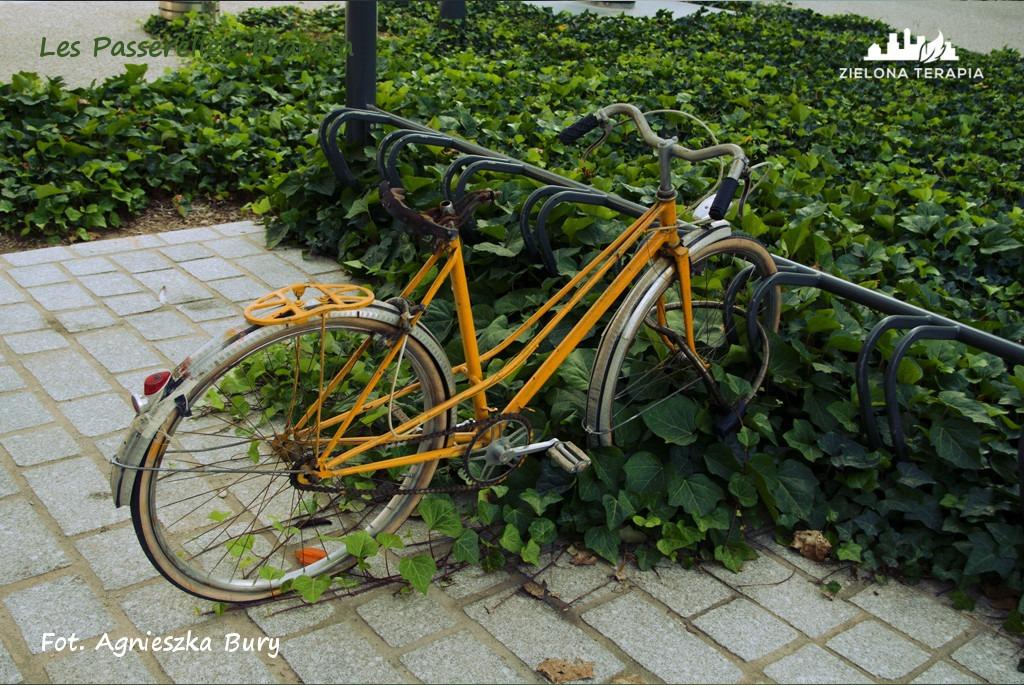 Zielona Terapia eko osiedle 15 - Eko-osiedle| Les Passerelles, Annecy, Francja