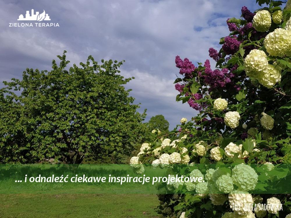 Zielona Terapia med 6 - Bardzo duży ogród przydomowy